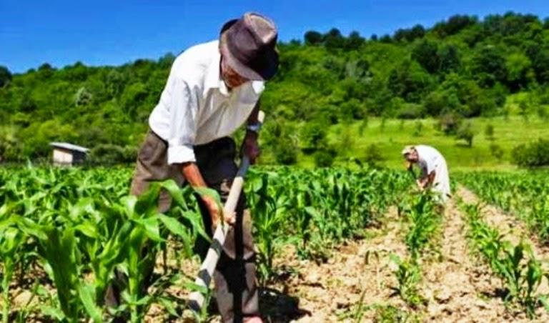 Agricultores de mais nove municípios pernambucanos terão direito ao Garantia-Safra
