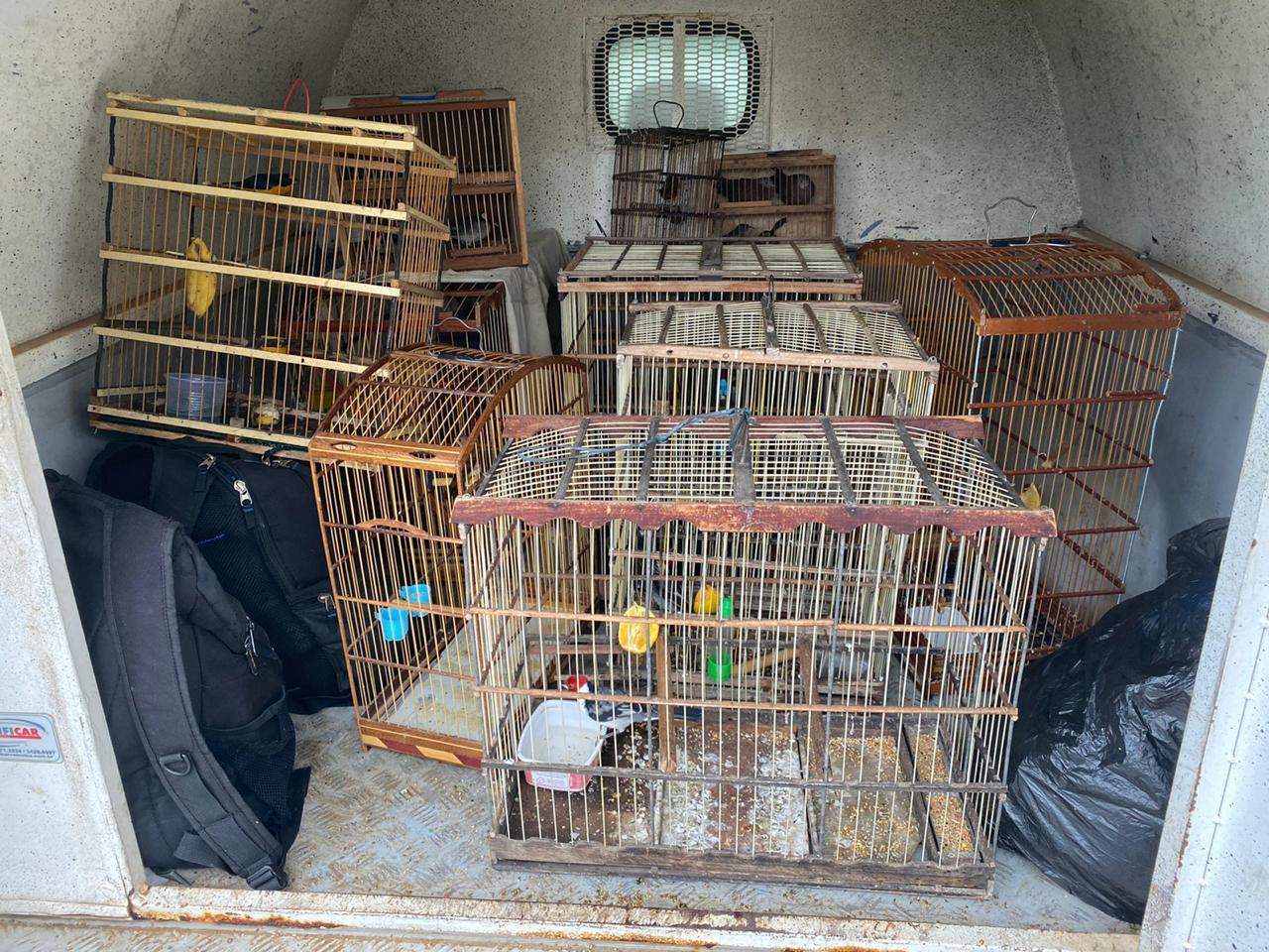 Operação apreende produtos de comércio ilegal e resgata diversos animais silvestres em Caruaru