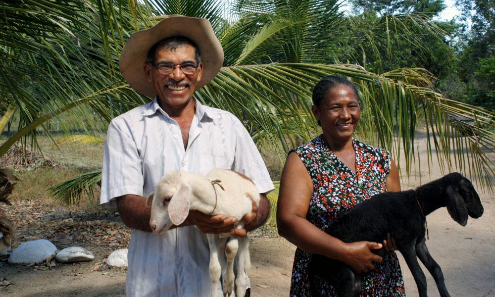 Câmara aprova auxílio emergencial de R$ 600 a pequenos agricultores